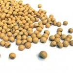 Receitas com a proteína da soja