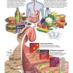 Qualidade de vida começa no intestino