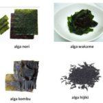 Algas – Propriedades e Receitas