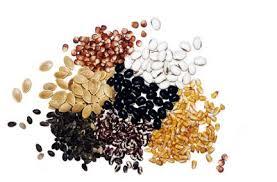 Consuma sementes!