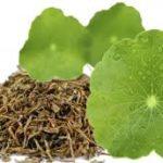Centella Asiatica – Benefícios
