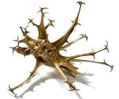 Artrite reumatoide, fibromialgia? Conheça a Garra do diabo!