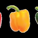 Glossário de Alimentos: Pimentão